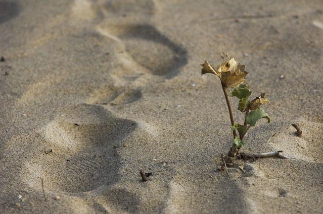 O Homem e a Natureza podem caminhar lado a lado - Foz do Rio Minho, Caminha