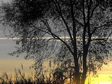 pianta che s'illumina al tramonto