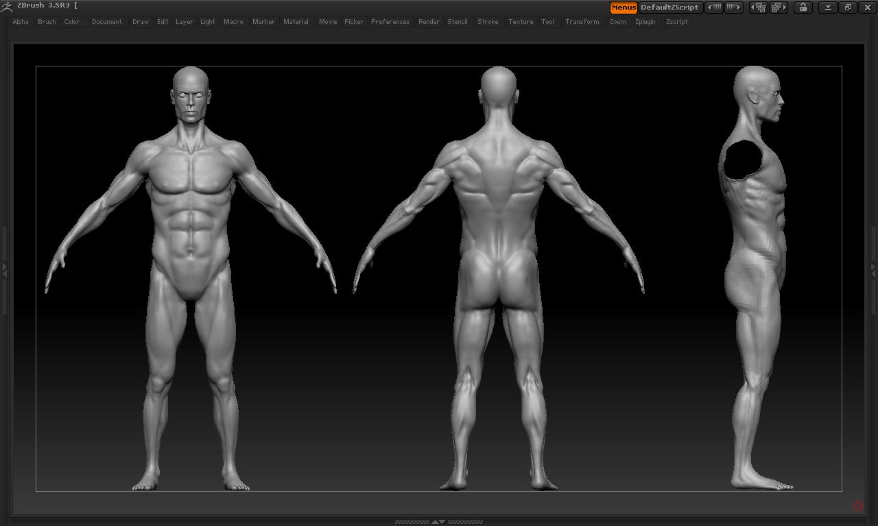 EBU: male anatomy study + retopology