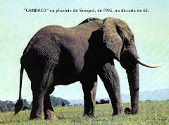 FAUNA BRAVIA DE MOÇAMBIQUE