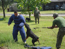 Cães k-9 dos fuzileiros navais