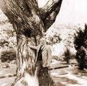 J.R.R. Tolkien y los árboles