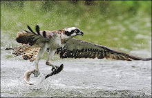 """""""Αετός"""" ΑΕΤΟΣ"""