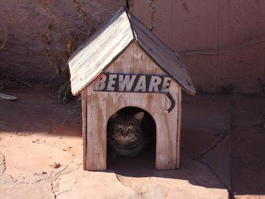 Beware of Kitty