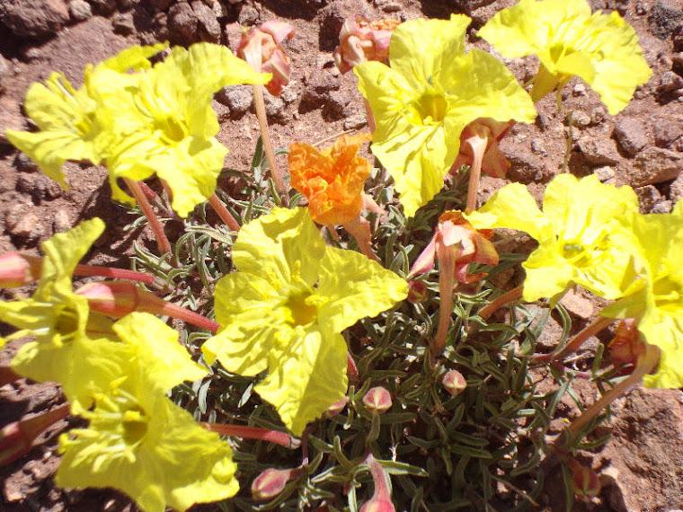 Exuberant Wildflowers