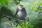 Vietnam's Primates