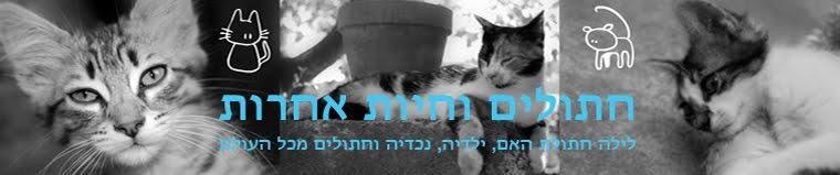חתולים וחיות אחרות