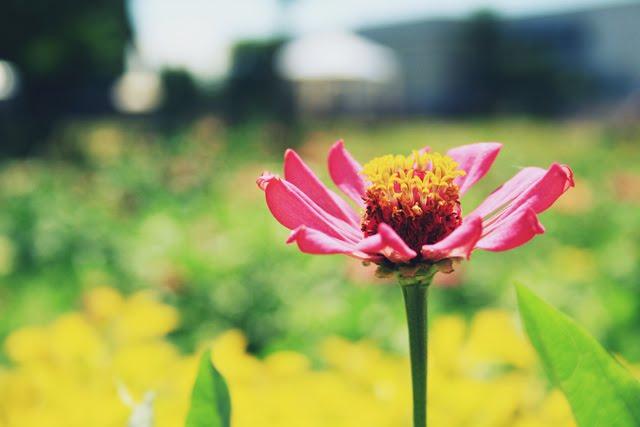 USEP flower