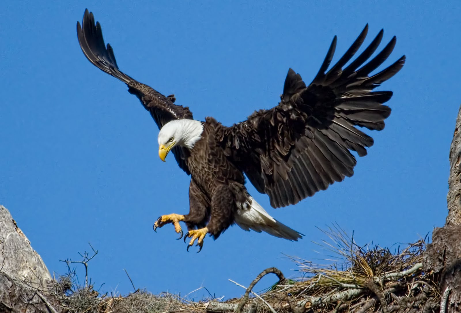 ... of a Pasco Tourist: Anclote Eagles Lure Birders from Around U.S