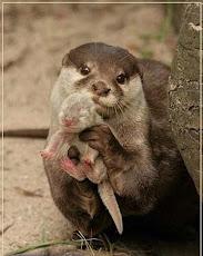...amor de madre...