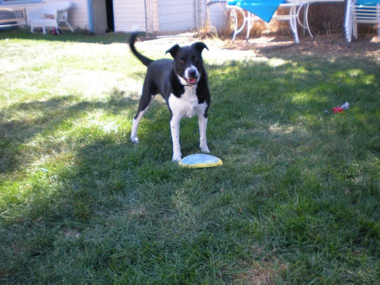 [manchas+and+frisbee]