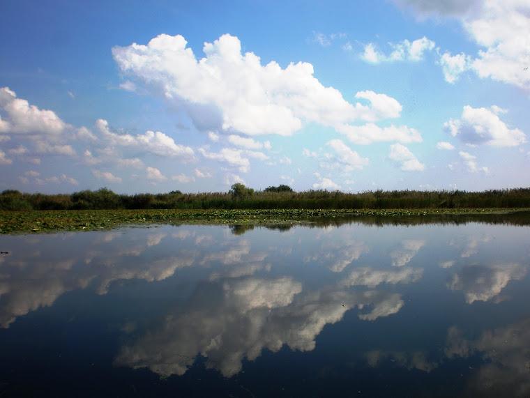 nori în oglindă