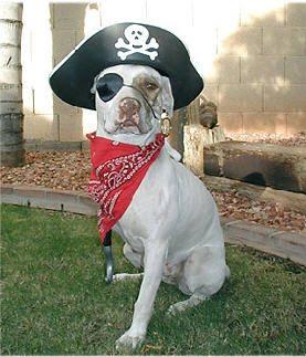 awesum dog costumes august 2010