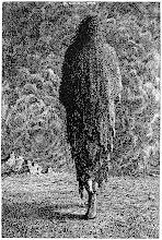 Mervyn Peake, serie Titus Groan Rime+of+the+Ancient+Mariner.5