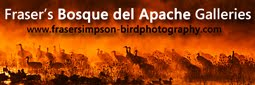 Bosque del Apache Galleries