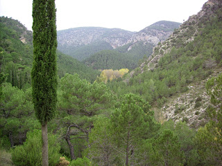 Bosque de cipreses con las lomas de la Abeja