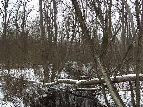 Cedar Bog, Ohio