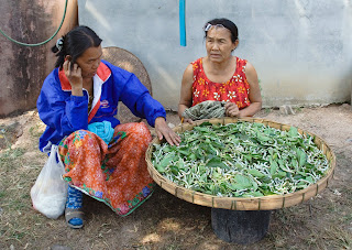raising silk worms without the use of chemicals to create organic silk yarns