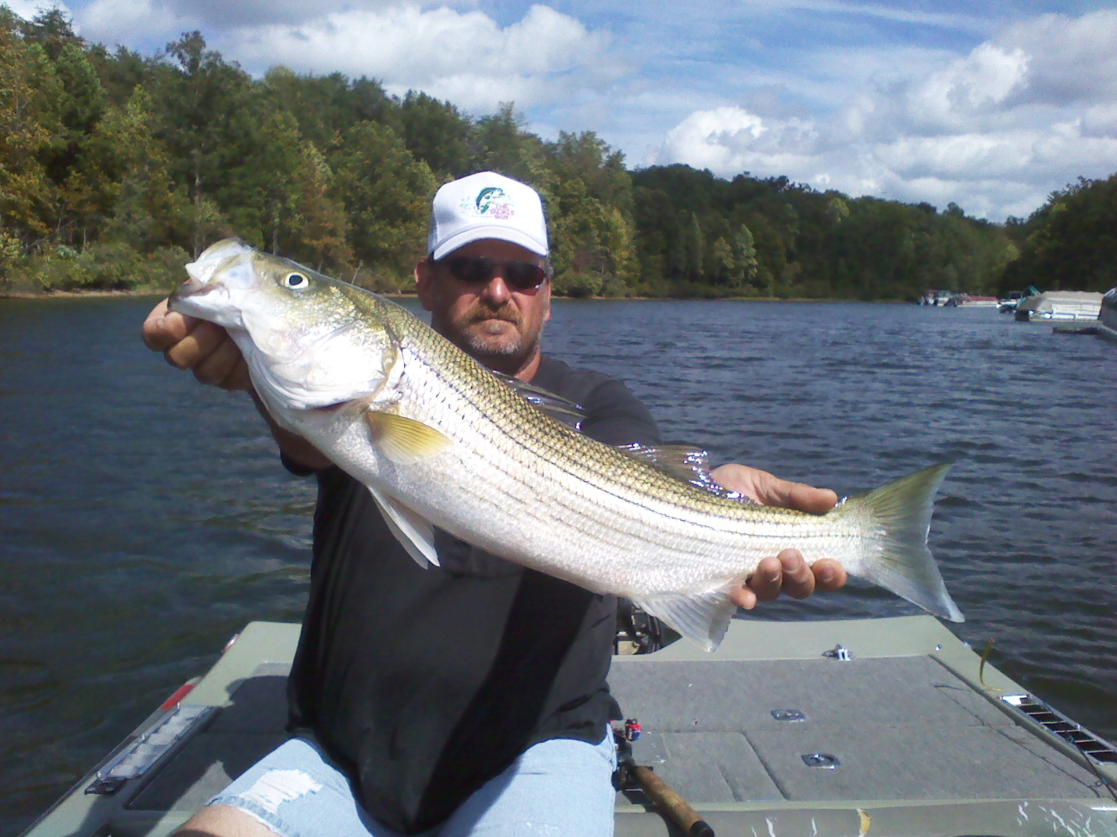 Striper pics chris craft lake anna guide blog for Lake anna fishing