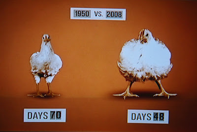 animated chickens in Food Inc