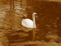 O cisne de Leda