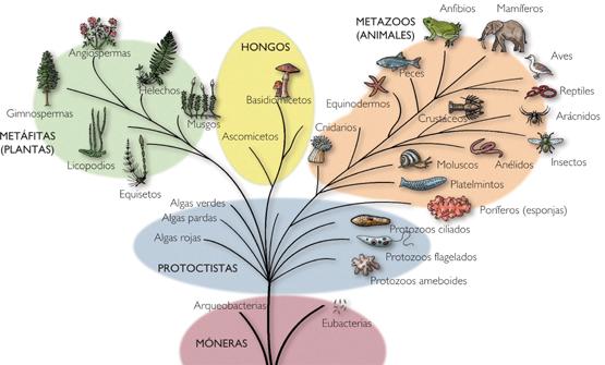 Asignaturas:Ciencia Secundaria a tu alcance