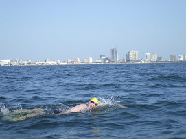 Tampa Bay Marathon Swim 2008