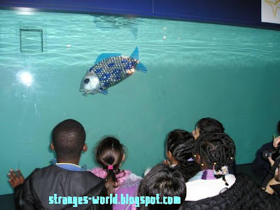 Robotic fishes @ strange world
