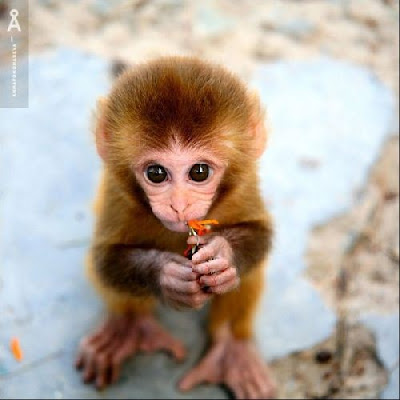 cute animal baby @ hot pics