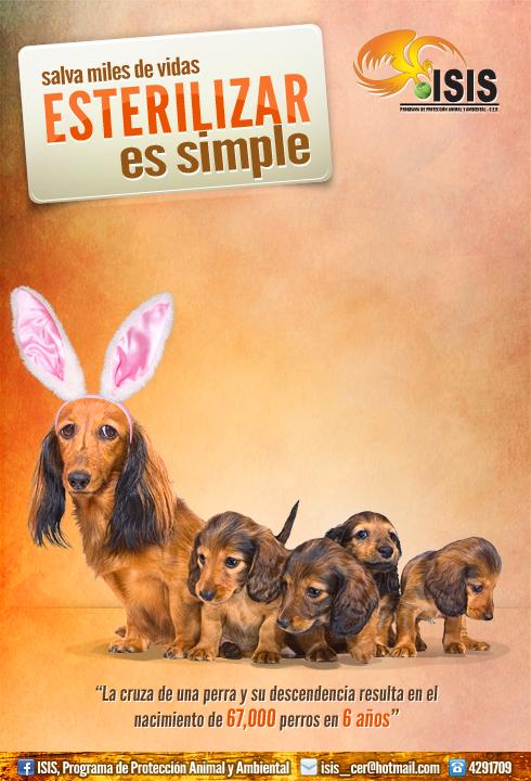 la importancia de la vida animal: