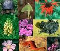 2010- Ano Internacional da Biodiversidade
