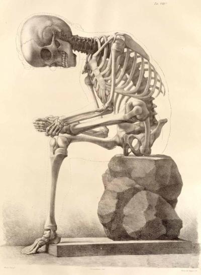 Elementi di anatomia fisiologica applicata alle belle arti figurative