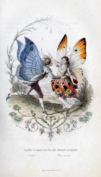 Amédée Varin, papillons