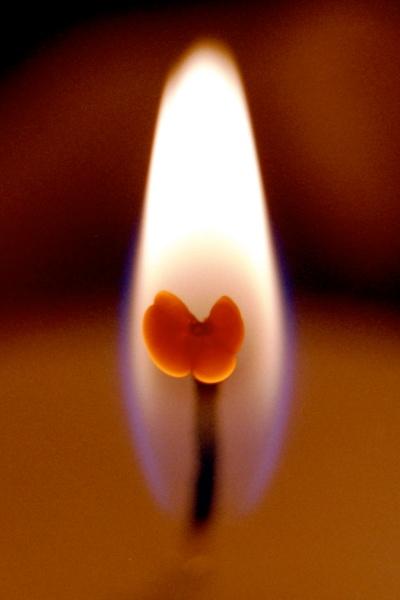 Sommerfugl som flammens hjerte