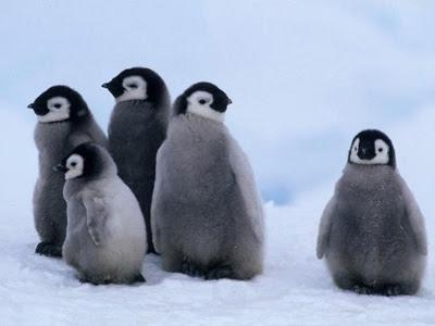 Pingvin mobbet udenfor