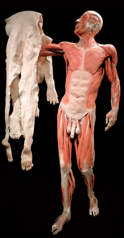 døde kroppe udstilling