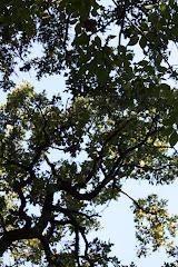 Emily's Tree