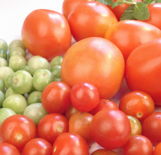 the secret of tomatoes seeds tomatoes tomato seeds herbal