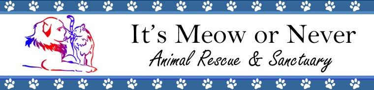 It's Meow or Never Animal Rescue & Sanctuary