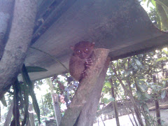 THE PHILIPPINE TARSIER....