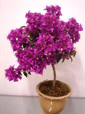 Trilhadomato primavera - Plantas de temporada primavera ...