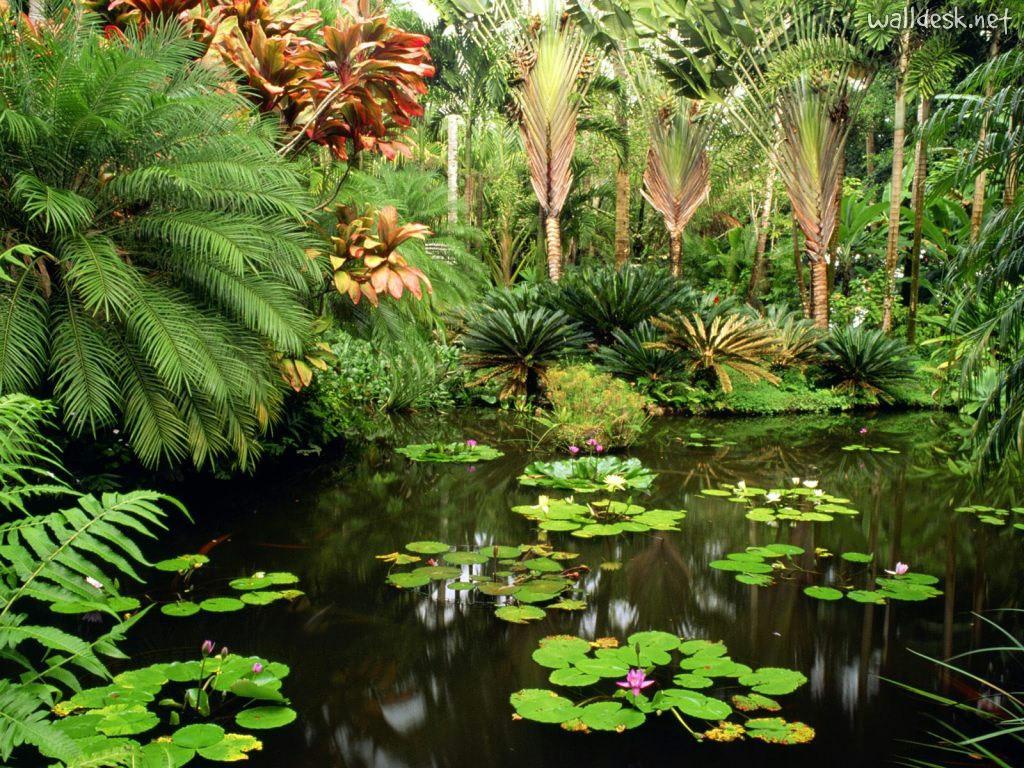 trilhadomato [Jardins] Jardim Tropical