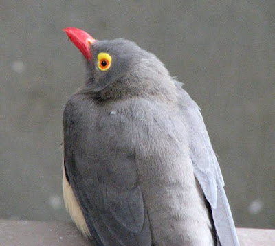 Bird with a Red Bill