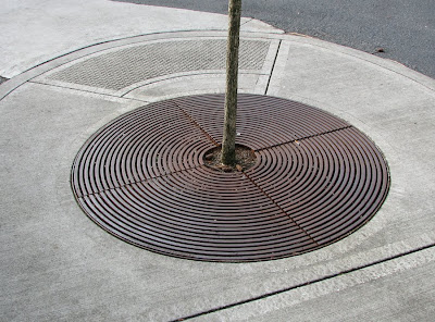 Grate Surrounding a Tree, Portland, Oregon