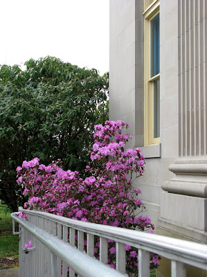 Azaleas bloom at the Astoria Post Office