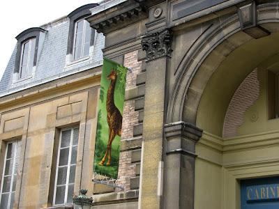 A giraffe banner at the the Cabinet d'Histoire, Jardin des Plantes, Paris