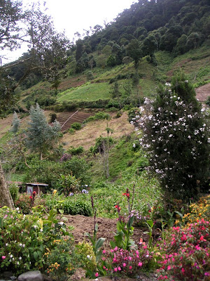 Farming on the hillsides, Las Nubes, Panama