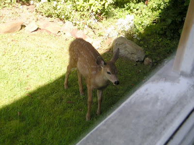 Deer on Harrison Street, Astoria, Oregon