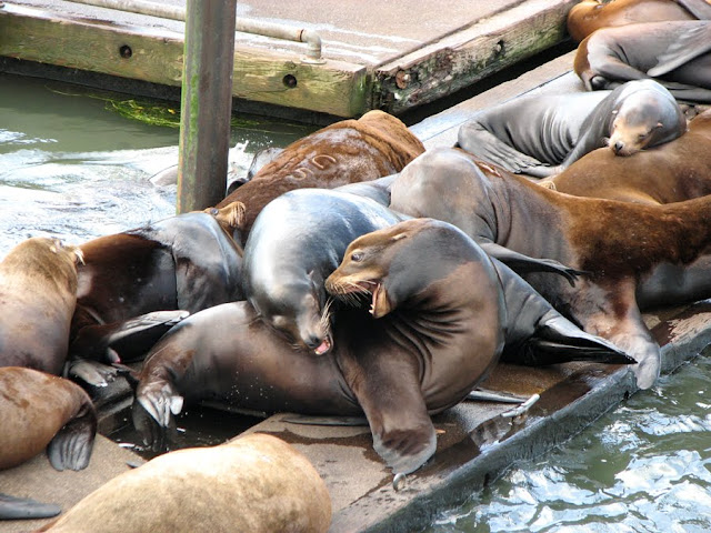 Sea Lions, by Sheryl Todd