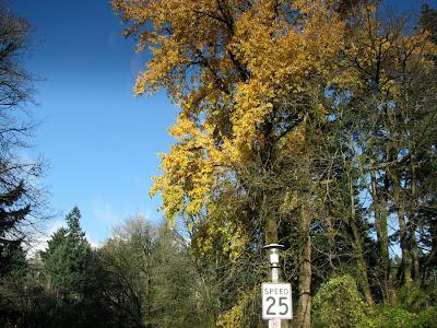 Trees, Portland